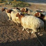 Panier de viande 4 - Septembre 2017